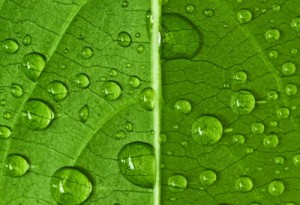 Can Rainwater Provide Clean, Safe Drinking Water?