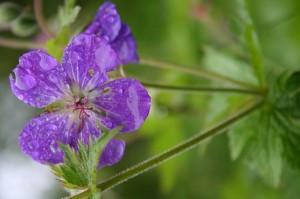 flower-768115_640