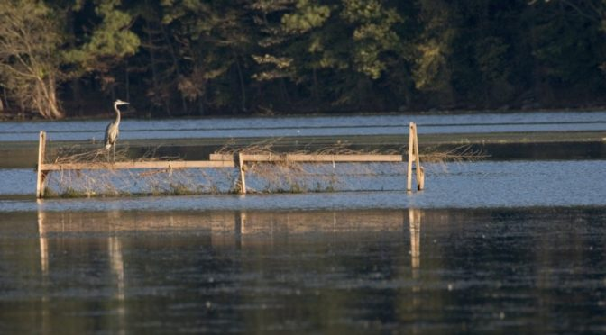 Toxic Chemicals Taint 8 Alabama Public Water Systems